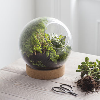 Cork Based Tabletop Terrarium