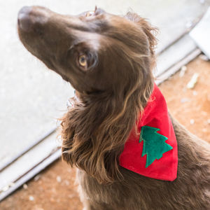 Pet Christmas Personalised Bandana