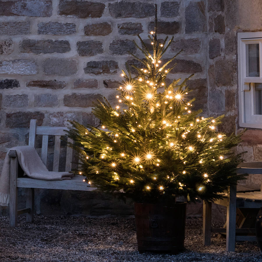 240 christmas tree lights by lights4fun notonthehighstreet