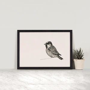 Jack, 'Sparrow' Bird Illustration Print - posters & prints