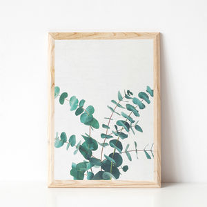 Eucalyptus Ii Photographic Print - view all new