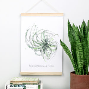 Air Plant Botanical Watercolour And Ink A3 Art Print - nature & landscape