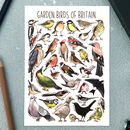 Garden Birds Of Britain Illustrated Postcard