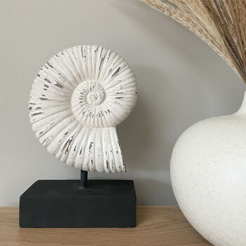 Decorative Serafina Shell