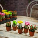 Colourful Flower Cactus Plants With Artificial Tops