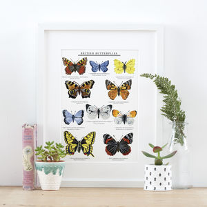 British Butterflies Illustrated Giclée Print - drawings & illustrations