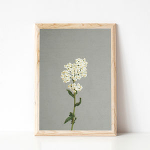 White Flowers Photographic Still Life Print