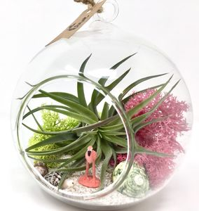 Flamingo Air Plant Terrarium Kit