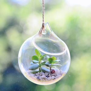 Hanging Glass Orb Money Plant Terrarium