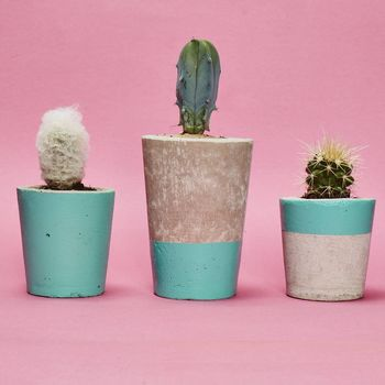 Set Of Three Turquoise Concrete Pots W/Cacti
