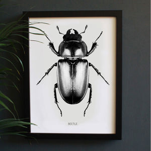 Encyclopaedic Inspired Fine Art Print, Beetle