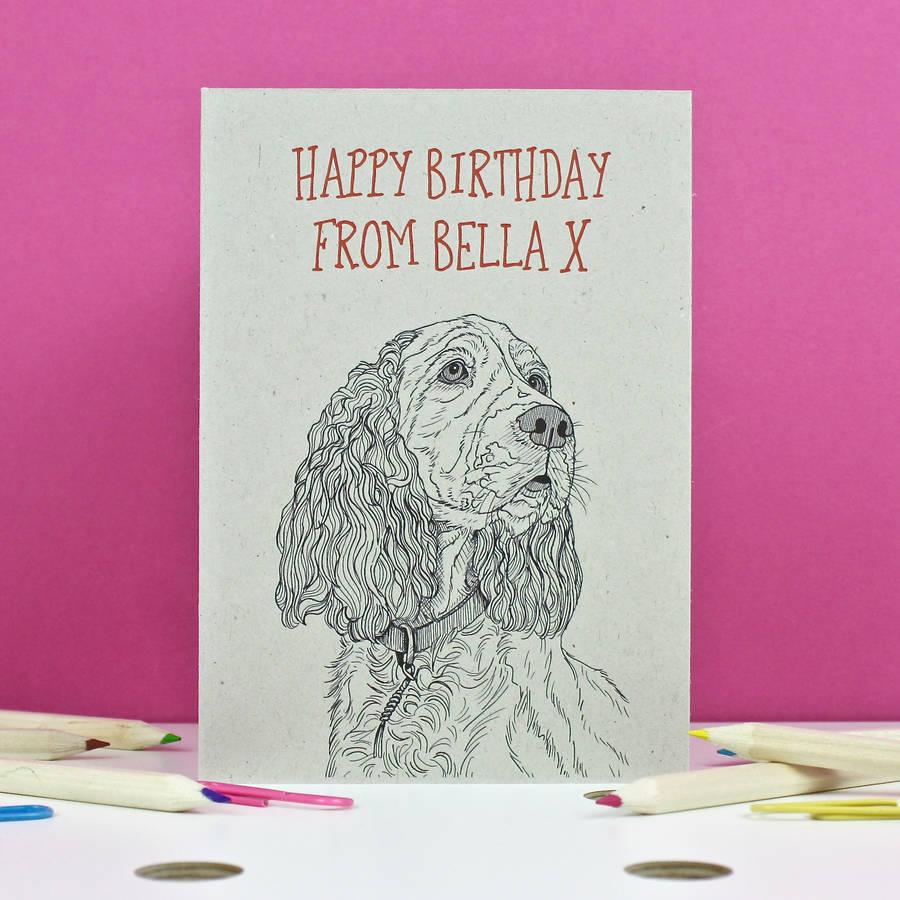 Boyfriend Birthday Card By Adam Regester Design: Spaniel Birthday Card By Adam Regester Design