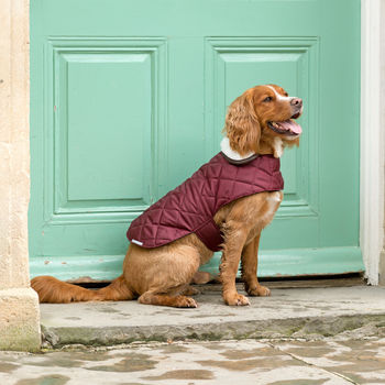 Grape Quilted Dog Coat