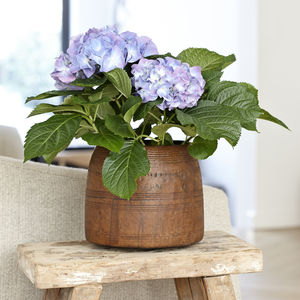 Antique Wooden Plant Pot - pots & planters