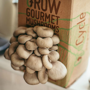 Grow Your Own Mushrooms Kit - best gifts for fathers