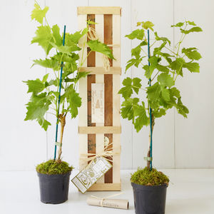 His And Her Grapevine Gift Set - gardening