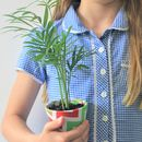 Grow Your Own House Plant