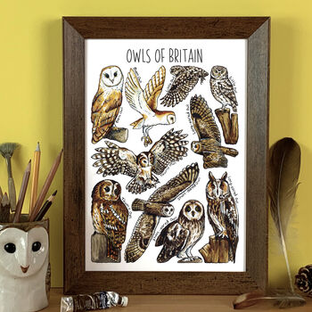 Owls Of Britain Wildlife Watercolour Print