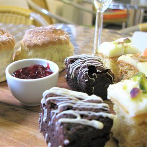 Sparkling Afternoon Tea And Alpaca Walk For Two - experiences