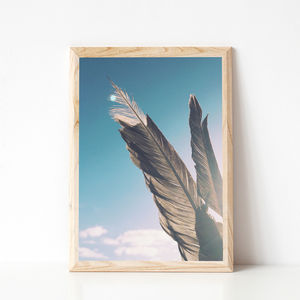 Brown Feathers Photographic Print - view all new