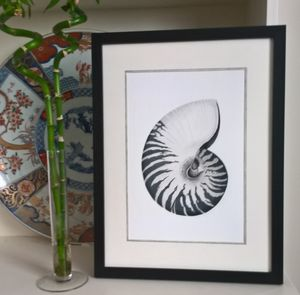 Framed Limited Edition Nautilus Shell Giclee Print - canvas prints & art