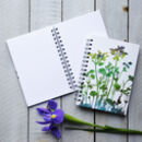 Agapanthus, Carnation Notebook / Journal