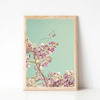 Wisteria Floral Photographic Print