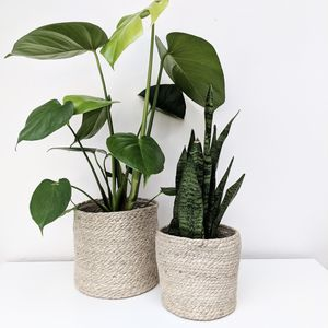 Jute Rope Basket Plant Pot - the greenhouse edit