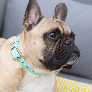 Mint Green Dot Dog Collar - dog collars