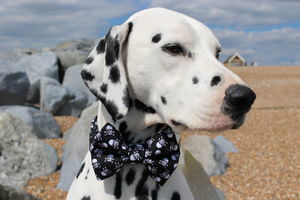 Skull And Crossbones Dog Bow Tie
