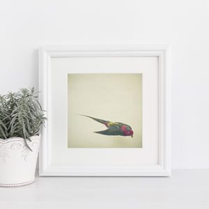 Bird Study Iv Photographic Nature Print