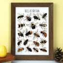 Bees Of Britain Wildlife Watercolour Print
