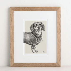 Pet Portrait Sketch - drawings & illustrations