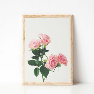 Spring Roses Photographic Flower Print
