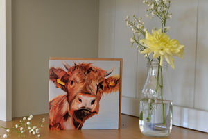 Alfie Highland Calf Greetings Card