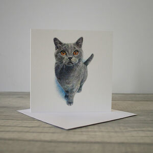 Illustrated Cat Greetings Card