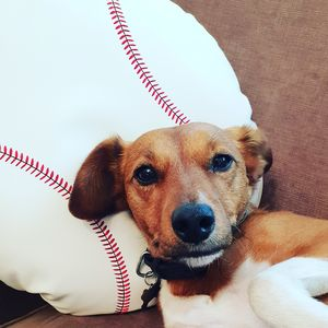 Baseball Cushion