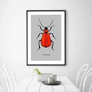 Cardinal Beetle Illustration Fine Art Print