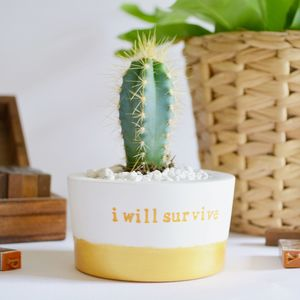 'I Will Survive' Plant Pot - for friends