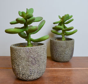 Faux Money Tree In Pot Set Of Two
