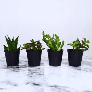 Green Plants For Sort Mini Pots - new in christmas