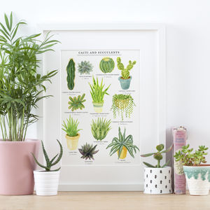 Cacti And Succulents Illustrated Giclée Print - drawings & illustrations