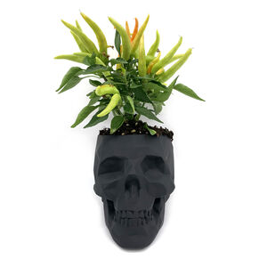 Skull Planter With Plant