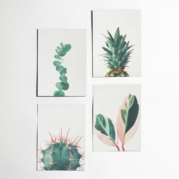 Set Of Four Nature Postcards With Envelopes. Still Life