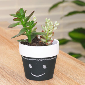 Chalkboard Pot With Succulents - new in garden