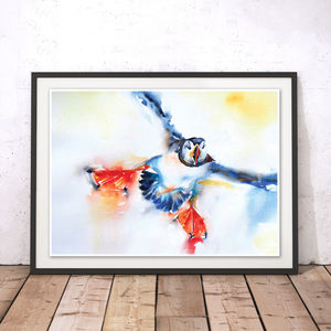 Coming In To Land Puffin Watercolour Fine Art Print - animals & wildlife