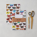 Birds, Bugs And Butterflies Notebook Set Of Three