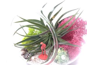Flamingo Diy Airplant Terrarium Kit - flowers, plants & vases
