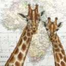 Romantic Giraffes On Map Of Africa