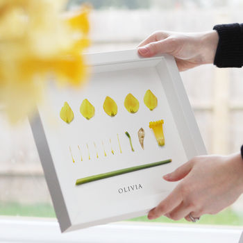 Personalised Daffodil Birth Flower Print